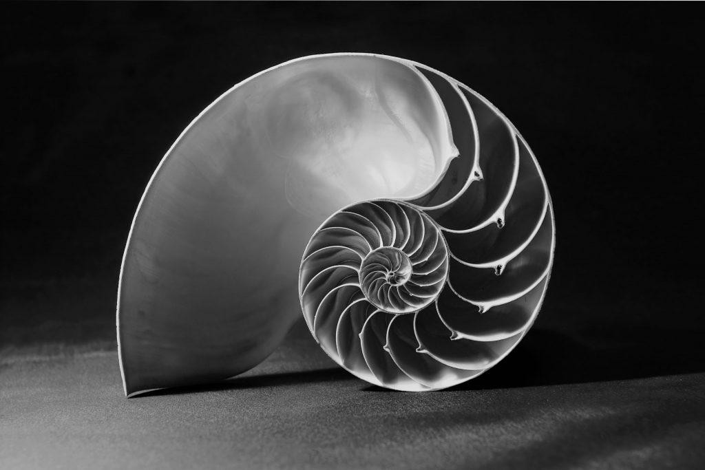Monochrome shot of the perfect fibonacci pattern inside a nautilus shell